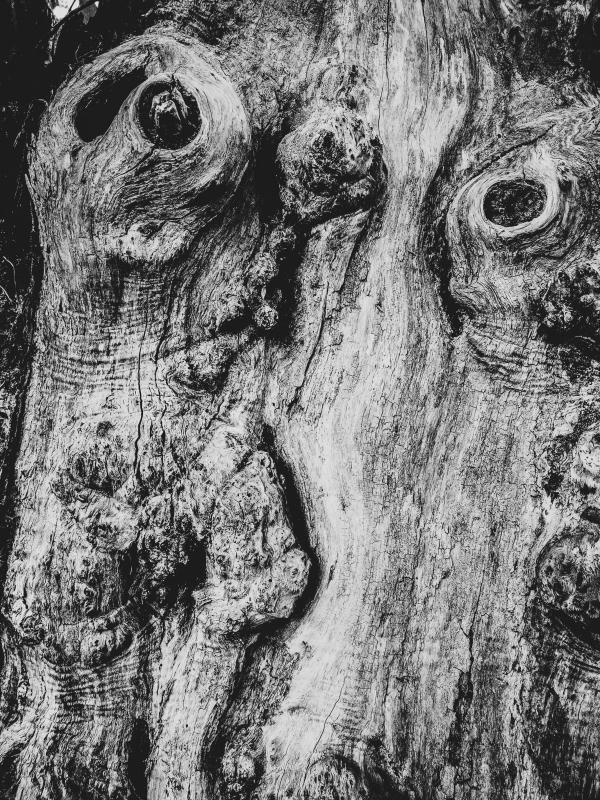 wood9.jpg