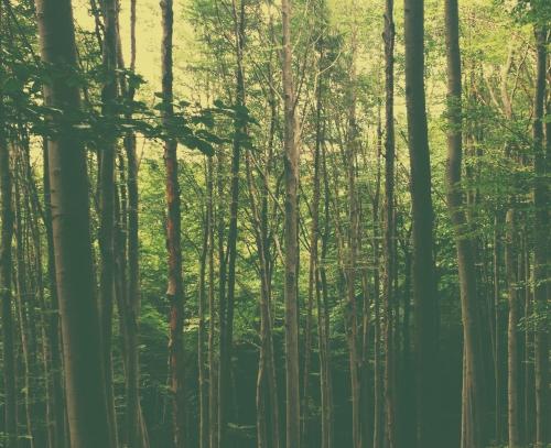 IMG_2404 wood 4.jpg